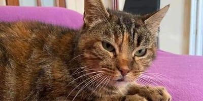 Esta gata tiene el corazón roto: tras conocer el calor de un hogar en Granada volvió a la calle