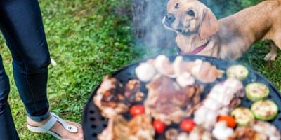 Po imprezie przy grillu pies ciężko choruje: dwa lata później lekarz dokonuje szokującego odkrycia