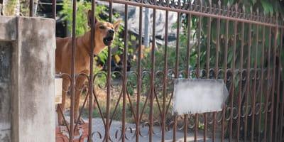 Warum mögen Hunde keine Postboten?