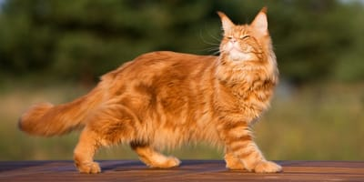 10 foto che provano la diversità e la bellezza dei gatti