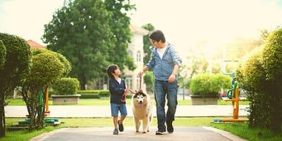 uomo-e-bambino-cinesi-a-passeggio-con-cane-husky-al-guinzaglio