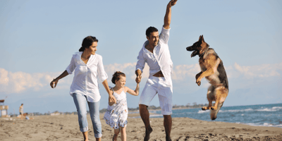 5 best tips for having the perfect staycation with your pet