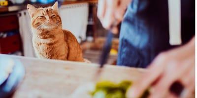 5 ricette di snack per gatti fatti in casa
