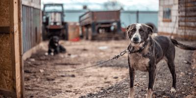 A sad dog looks into camera