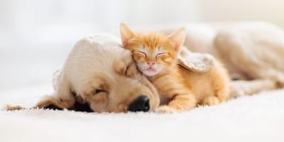Un perro junto a un gato amigo