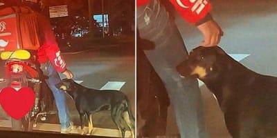 Perro se acerca a un desconocido en la calle sin imaginar el giro que va a dar su vida