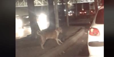 Video: el momento exacto en que la vida de un perro cambia para siempre