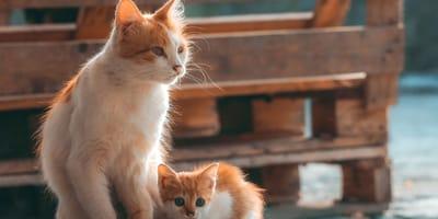 La convivenza tra mamma gatta e gattino è una buona idea?