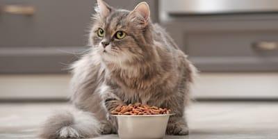 Qual è l'alimentazione di un gatto sterilizzato?