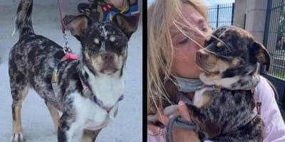 L'incredibile storia di Ziggy, il cane rubato a Parigi e ritrovato a Cannes