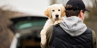 Dog theft in the UK: Why it's rising and how to prevent it