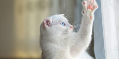 5 Pawsome things you should know about your cats' paws