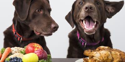 cani-con-alimentazione-vegana-e-onnivora