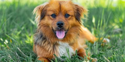 cane-sull-erba