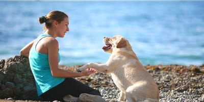 cane-in-spiaggia-con-ragazza