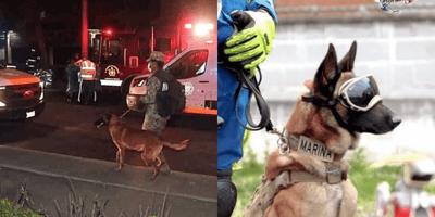 Estos son los perros que acudieron al rescate en el metro
