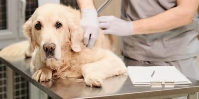 """Operazione """"Balto"""": sotto accusa un veterinario di Ravenna"""