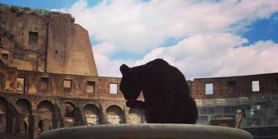 Addio alla gatta Nerina, la regina del Colosseo