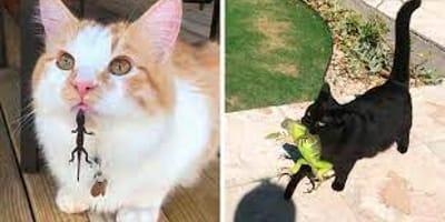 7 zdjęć kotów i jaszczurek, które wprawią Was w dobry humor na cały dzień!