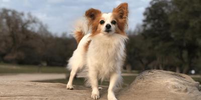 Adoptar un perro salva vidas: Langostino tiene pruebas