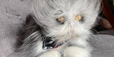 ¿Qué ves aquí: un gato o un perro?