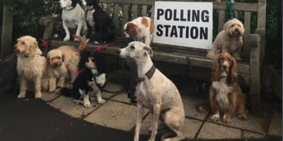 Polling station pups: The real stars of voting day revealed