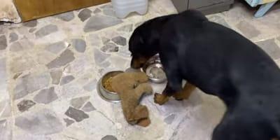 Perrito que vivía en extrema violencia reacciona así al ver un peluche por primera vez