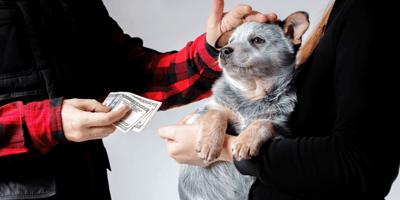 Man geeft geld aan vrouw met puppy in armen