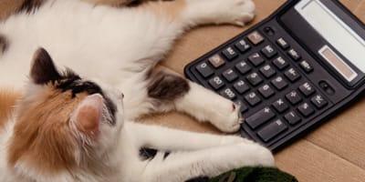 ¿A cuánto equivale 1 año de gato? Descúbrelo con esta calculadora súper fácil