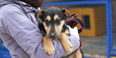 Hoe adopteer ik een asielhond? Advies voor toekomstige verzorgers