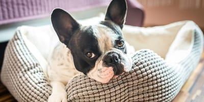 Letto per cani: un luogo di comfort