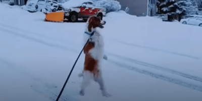People think they're hallucinating when they see dog walking  like a human