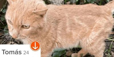 Da a su gato en adopción a través de Tinder en Madrid