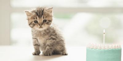 Gato criollo: cuánto crecen, cuánto viven y todas las características de estos mininos
