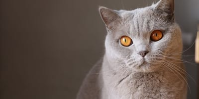 Cat's eyes: What is a cat telling you with their eyes