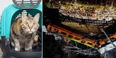 Gatito sobrevive al accidente del metro: volvía de su esterilización en la línea 12
