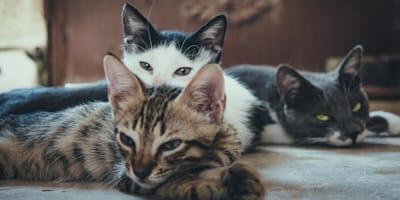 La meta: 11 toneladas de alimento para los gatitos que más lo necesitan ¡Así puedes apoyar!