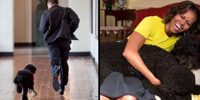 Bo è morto: l'omaggio della famiglia Obama e le foto più belle