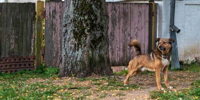 Hund vor dem Haus.