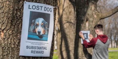Is your pet missing? Here are some tips to help your find your pet