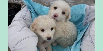 La storia di Oscar e Omar, due cuccioli che hanno bisogno d'amore