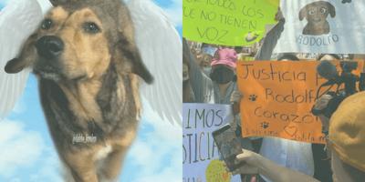 Dejan libre al presunto asesino del perrito de Los Mochis