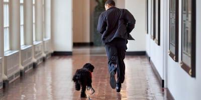 Obama rennt mit Hund Boo im Garten