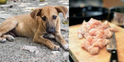 Edomex: Dejan pollo en la calle para los perritos, pero ocultan un escalofriante propósito