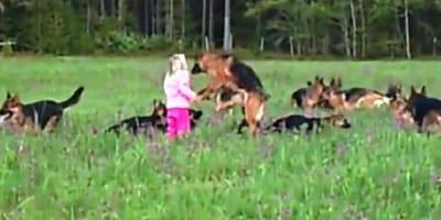 Ve a una niña entre 14 pastores alemanes en el bosque: lo que pasa es extraordinario (Vídeo)