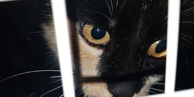 Gata quiere salir ''de la cárcel'' y volver a su hogar... aunque este sea muy peligroso