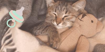 10 pruebas de que los gatos se portan como bebés