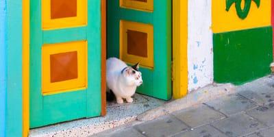 ¿Cuánto cuesta tener un gato en Colombia?
