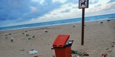 En esta playa de Cádiz están prohibidos los perros pero no ''los salvajes'' (Fotos)