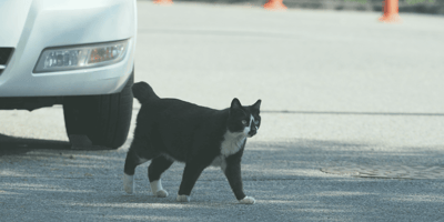 Atropella a un gato y su reacción inmediata conmueve a miles de personas